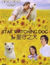 Star Watching Dog